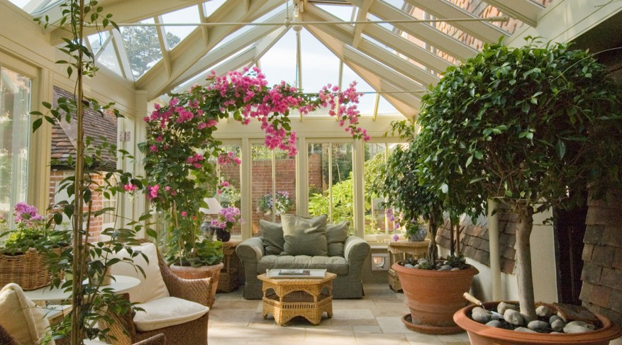 bougainvillea in conservatory