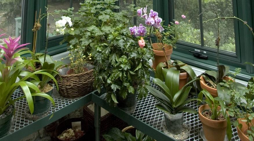 plant shelving
